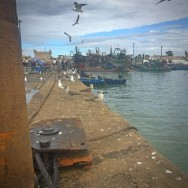 #Off2Africa Jour 5 Essaouira Maroc